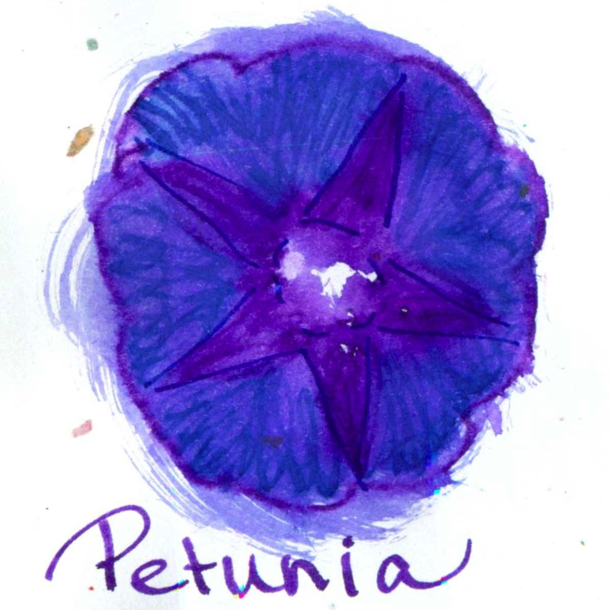 2014-Ink_259-Petunia.jpg