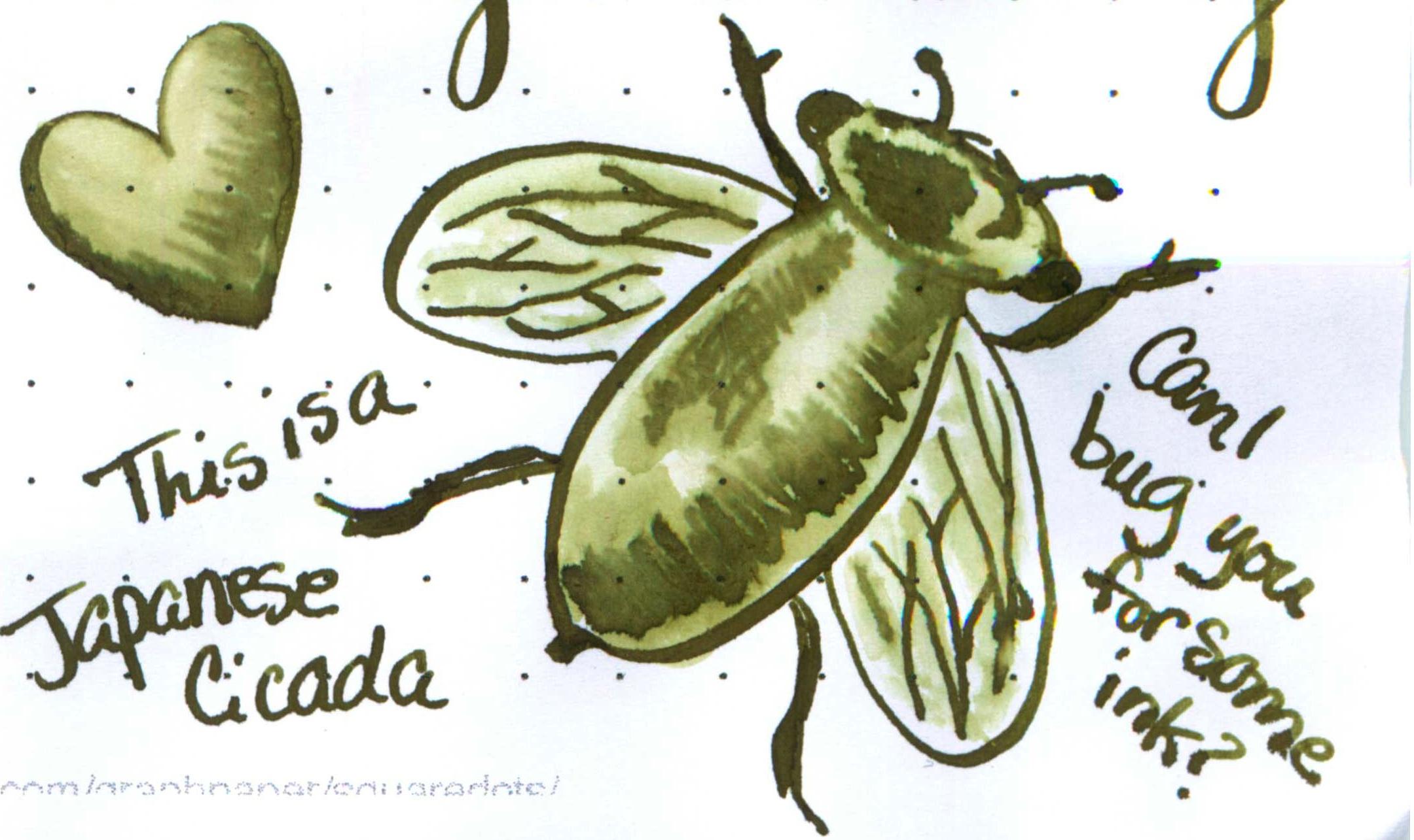 Japanese-Cicada.jpg