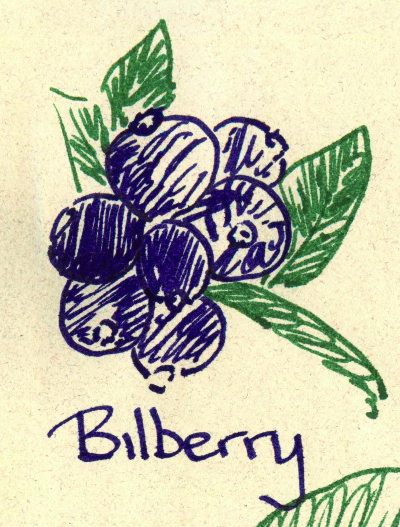 Diamine_Bilberry.jpg